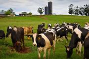 Студенческая практика на норковых фермах Дании