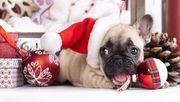 Новогодние скидки! Продаются недорого щенки